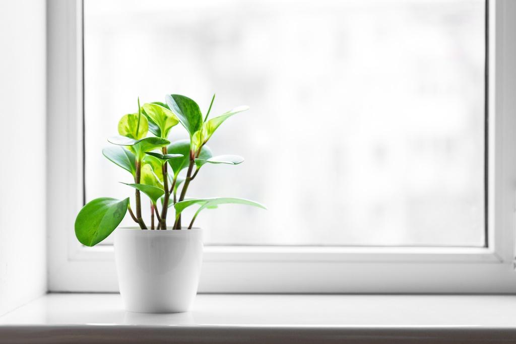 window_eco